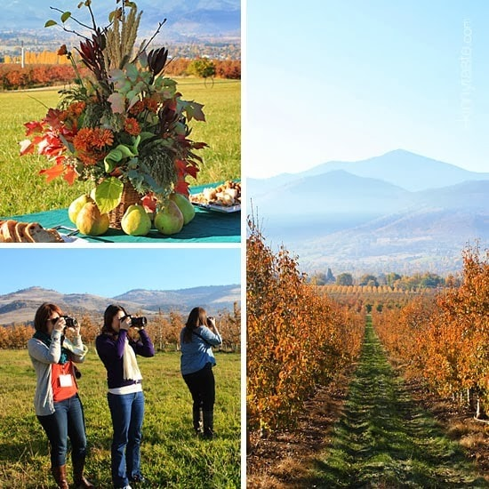 A fall centerpiece arrangement surrounded by pears, three women taking pictures with rolling hills in the background, a fall scene with a path at an orchard leading to a field and mountains in the background